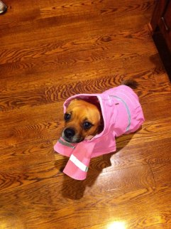 Ready for the rain